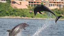 WILD DOLPHINS AND SNORKELING ECOTOURS, Puerto Vallarta, Day Cruises