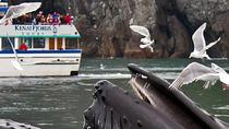 Gray Whale Watch Tour, Seward, Day Cruises