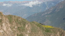 2-Day Colca Canyon by Bus from Arequipa Finishing in Puno, Arequipa, Multi-day Tours