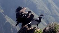 Arequipa Colca to Puno, Full dayTour, Arequipa, Day Trips
