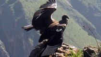 Full Day Tour to Colca Canyon, Daily departures, Starts and ends in Arequipa, Arequipa, Full-day...