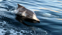 DAWN WITH DOLPHIN, Muscat, Day Trips