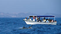 DOLPHINS AND SNORKELING TRIP, Muscat, Day Trips