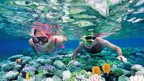 Catalina Island Snorkel Excursion from Punta Cana, Punta Cana, Swim with Dolphins