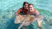 Shark and Stingray Encounter from Punta Cana, Punta Cana, Nature & Wildlife