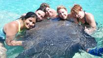 Sharks Stingrays and Sea Lions from Punta Cana, Punta Cana, Nature & Wildlife