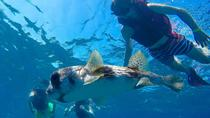 Sosua Bay Snorkeling Tour, Puerto Plata, Day Trips