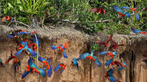 Macaw Clay Lick 2 days & 1 night, Puerto Maldonado, Cultural Tours