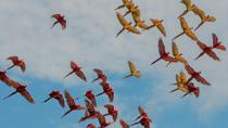 Macaw Clay Lick 3 days & 2 nights, Puerto Maldonado, Cultural Tours