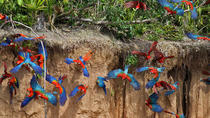 Macaw Clay Lick 4 days & 3 nights, South Coast, Cultural Tours