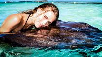 Southern Stingray Marine Animal Interaction and Snorkel, St John's, Snorkeling