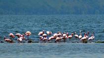 DAY TOUR TO LAKE NAKURU NATIONALPARK WITH OPTIONAL BOAT RIDE ON LAKE NAIVASHA, Nairobi, Cultural...