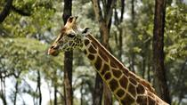 Day-Trip to Giraffe Center, Sheldrick Elephant Trust and Bomas of Kenya, Nairobi, Cultural Tours