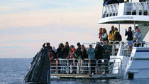 Hervey Bay Whale Watching Cruise, Hervey Bay, Day Trips