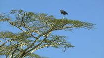 Africa Fund for Endangered Wildlife's Giraffe Centre and David Sheldrick's Elephant Orphanage Tour...