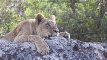 Nairobi National Park, Karen Blixen Museum and Langata Giraffe Center Tour from Nairobi, Nairobi,...