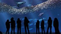 Monterey Bay Aquarium Admission, Monterey & Carmel, null
