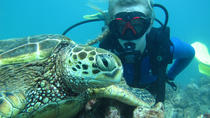 Beginner Scuba Dive with Turtles, Oahu, Scuba Diving