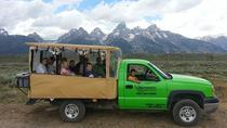Grand Teton Wildlife Safari in Open-Air Vehicle, Jackson Hole, Nature & Wildlife