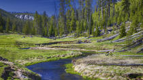 Yellowstone National Park Small-Group Wildlife Safari, Jackson Hole, Eco Tours