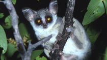 BUSH BABY NIGHT WALK, Pretoria, City Tours