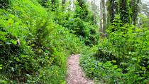 San Francisco Urban Hike: Hills and Hidden Gems, San Francisco, null