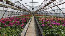 Santa Elena Day Trip: Silleteros and Flower Farm Cultural Tour, Medellín, Literary, Art & ...