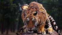 2N & 3D Incredible Madhya Pradesh Experience - Kanha National Park Ex Jabalpur, Bhopal, Attraction ...
