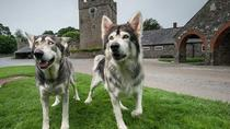 Giro del Direwolf del Trono di Spade, Belfast, Movie & TV Tours