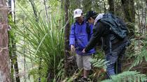 Bay of Islands Shore Excursion: Puketi Rainforest Guided Walk, Bay of Islands, Helicopter Tours