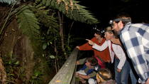 Puketi Rainforest Guided Walks, Bay of Islands, Walking Tours