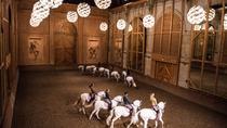 Equestrian show La Voie de l'écuyer, Versailles, Theater, Shows & Musicals