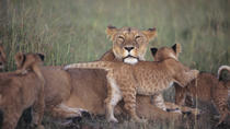 7-Night Kenya Basic Camping Safari from Nairobi: Masai Mara and Loita Hills, Nairobi, null