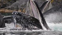 Superior Private Whale Watching - 3hrs on the water!, Juneau, Cultural Tours