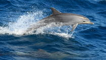 Dolphin and Marine Discovery Lunch Cruise, Queensland, Lunch Cruises