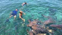 Hol Chan Marine Reserve and Shark Ray Alley Snorkeling Tour, Belize City, null
