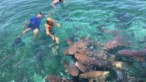 Hol Chan Marine Reserve und Shark Ray Alley Schnorcheltour, Belize City, Ports of Call Tours