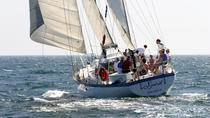 Spirit - Whale and Dolphin Watch with a Sunset on a 54-Foot Sailing Yacht