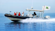 Catalina Island Day Trip from Anaheim or Los Angeles with Ocean Runner Boat Tour, Anaheim & ...
