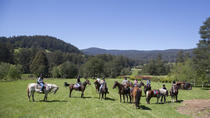 Yarra Valley 1 Hour Horse Trail Ride, Yarra Valley, 4WD, ATV & Off-Road Tours