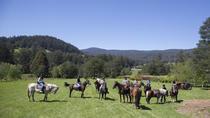 Yarra Valley 2 Hour Horse Trail Ride, Yarra Valley, Horseback Riding
