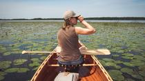BIRDWATCH - Premium guided canoe tour at Cape Vente, Nemunas Delta Regional Park, Klaipeda, Nature ...