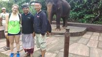 Morning Breakfast With Orangutans at Bali Zoo Park included hotel transfer, Ubud, Zoo Tickets &...