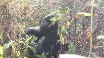 4 Days Gorilla Trekking Flying Safari In Uganda, Uganda, Multi-day Tours