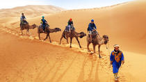 Sunset or Sunrise Camel ride in the Sahara Desert of Douz, Djerba, Nature & Wildlife