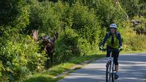 Coastal Fat-Tire Biking Tour in Anchorage , Anchorage, Bike & Mountain Bike Tours