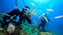 Nha Trang Diving Tour to Hon Mun Island, Nha Trang, Day Trips