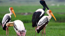 Explore The Keoladeo Ghana National Park with Fatehpur Sikri, New Delhi, Attraction Tickets