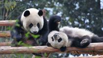 Chengdu Giant Panda Breeding Research Base Admission Ticket, Chengdu, Private Sightseeing Tours