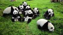 One-Way Airport Transfer with Giant Panda Bear Research Center in Chengdu, Chengdu